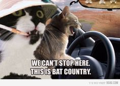 Fear and Loathing, but with kitties.... @Emilie Dale