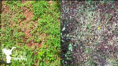 Stop the weeds from growing and kill them from overtaking your yard with this natural weed killer! Only 3 ingredients Weeds In Lawn, Garden Weeds, Lawn And Garden, Garden Tips, Garden Projects, Garden Plants, Home Design, Weed Killer Homemade, Lawn Care Tips