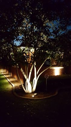 Landscape Lighting #kentuckytwist, #thealternativelandscapecompany, #landscapelighting