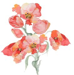 illustration friday tulips
