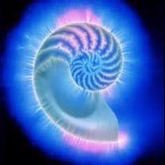 Beautiful kirlian photograph of Nautilus shell