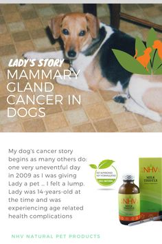 My dog cancer story begins as many others do: one very uneventful day in 2009 as I was giving Lady a pet … I felt a lump. Lady was 14-years-old at the time and was experiencing age related health complications, including the symptoms of Cushing's disease. She had been on NHV supplements and was doing well. A few weeks before finding the mass, I noticed her energy had decreased and she was lethargic. We made an appointment at the vet...Read the complete story.