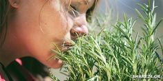 Sniffing Rosemary Can Increase Memory By - Collective Spark Rosemary Health Benefits, Increase Memory, Cocina Natural, Medicinal Herbs, Medical Advice, Shakespeare, Natural Remedies, Herbalism, Improve Yourself