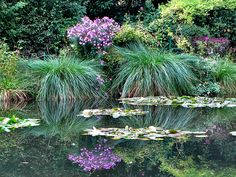 Reflections in the water from Monet's Garden in Giverny, France.