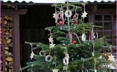 Superb California Backyard Christmas Trees California Backyard Christmas Trees |  Home Design Ideas