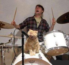 Cat singing on drums set