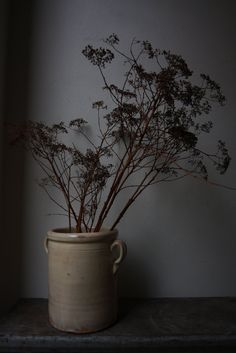 Dried cow parsley in rustic stoneware pot