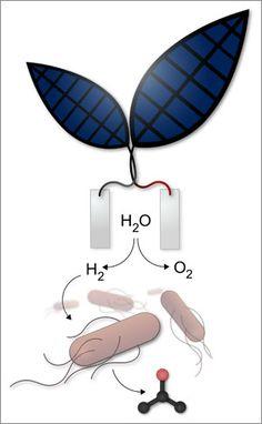 """Bionic leaf"" uses bacteria to convert solar energy into liquid fuel"