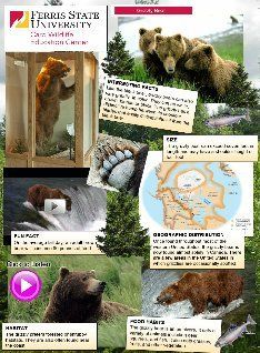 Is Any North American Subspecies Of The