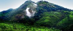 kerala tour packages provides inbound tour operator in every destination or district that takes you to the excursion of major spots. bit.ly/keralatourpackage
