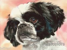Shih Tzu Puppy Dog Art Print of Watercolor Painting Artist Judith Stein Signed
