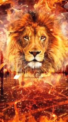 Lion Live Wallpaper, Animal Wallpaper, Fire Lion, Lions Live, Pride Of Lions, Lions Photos, Images Of Lions, Lion Photography, Lion King Art