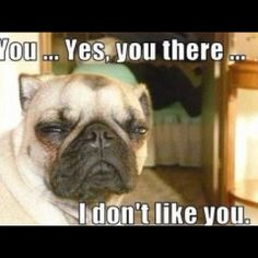 #dogmeme  #funny  #dog  #youyesyou  #dontlike  #haha  #lol  www.anilols.co.uk for more funny animals #cats