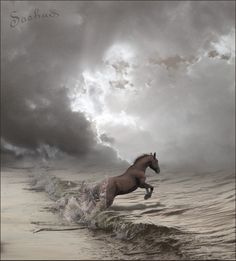 A beautiful horse jumping into the ocean. Another inspiration for RAGING SEA: The Legend of Lancelot by Kim Headlee, volume 3 of The Dragon's Dove Chronicles. All The Pretty Horses, Beautiful Horses, Animals Beautiful, Cute Animals, Montage Photo, Majestic Horse, Clydesdale, Mundo Animal, Horse Pictures