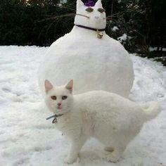 This gives new meaning to the words Snow Cat!  giggles