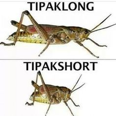 29 Puntastic Jokes That Only Pinoys Will Understand Pinoy Jokes Tagalog, Memes Pinoy, Tagalog Quotes Hugot Funny, Pinoy Quotes, Filipino Quotes, Filipino Funny, Funny Relatable Memes, Funny Jokes, Hilarious