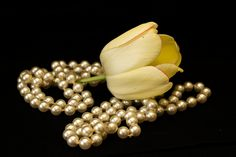 https://www.flickr.com/photos/arfisanok/8713831589/in/pool-tulips