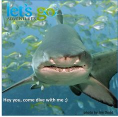 Have you planned your weekend? Come and have a close encounter with those amazing creatures. The Grey Nurses are awesome sharks to dive with. Book your boat dive now. Call us on 49814331.