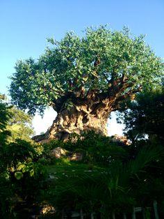 Tree of Life  Animal Kingdom Disney World
