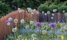 villa sassi - Torino - dettaglio verde allium in varietà e steccato in legno - Giardino Segreto di Cristiana Ruspa - Foto di Dario Fusaro