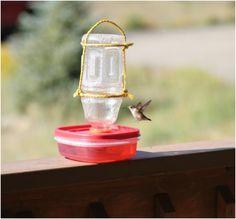 Top 10 Eco-Friendly DIY Bird Feeders