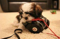 Beats dog