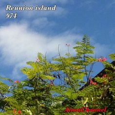 #reunionisland#photo#photography#photoamateur#974island#team974#ile#iledelareunion#ileintense#lareunion#paysage#monile#ciel#sky#trees#arbres#loveisland#instaisland#photoisland#### by aimachannelyt