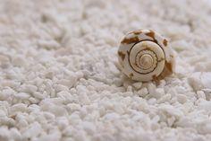 Free Image on Pixabay - Mussels, Seashells, Quiet, Scene