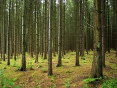 Bastogne, Belgium, the Bois Jacques woods near Foy, where you can still stand in foxholes from the winter of 44-45.