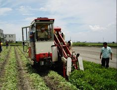 ◆ 雲農牌TPH3252落花生聯合收穫機