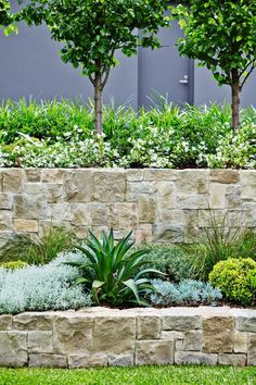 Beautiful tiered stone walls, softened by plantings. Trees at upper wall provide privacy. #wallgardens