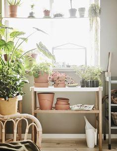 Un huerto en casa - HouseDécor España