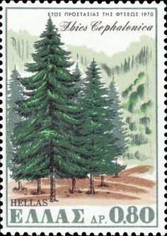 Sello: Nature Conservation Year - The Kefallonia Fir tree (Grecia) (Environment protection) Mi:GR 1067 Nature Film, Nature Music, Postage Stamp Design, Postage Stamps, Wild Nature, Nature Nature, Nature Sounds, Seen, Tampons