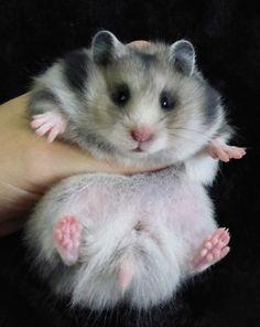 Rachel Owers - Dark Grey LH Hamster