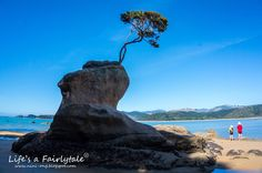 Life's a Fairytale: The Relaxing and Finest Coastal Track - Abel Tasman Coast Track