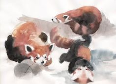 red panda watercolor