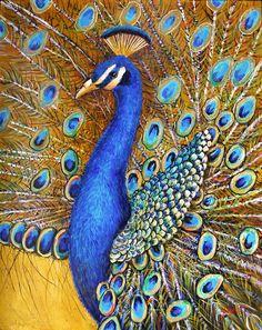 "Bird of paradise | Bird of Paradise"""
