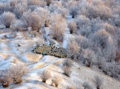 A Crisp Photograph of a Shephard Herding Sheep on a Cold Winter Morning in Romania Photos Of The Week, Great Photos, Cool Pictures, Amazing Pics, Wonderful Things, Awesome, Winter Trees, Cultural, Color Of Life
