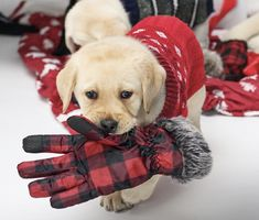 3ee687bdda5 Who needs partridges and pear trees  We ve got PUPPIES in buffalo plaid .  Check back every day for the newest gift items from Eddie Bauer this  holiday ...