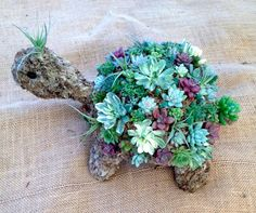 Mini succulent moss turtle with button eyes