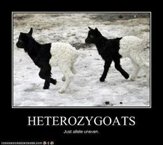 Ahahaha. Just allele uneven... just a lil uneven! Ah who comes up with this stuff man!
