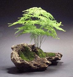 asparagus fern in rock-indoors here or use maidenhair fern outside - love - DIY Fairy Gardens