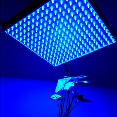 Blue Spectrum 225 LED Hydroponic Plant Grow Light 14WAdaptor  US -- Check this awesome product by going to the link at the image.