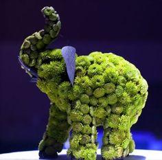 Floral elephant for Indian wedding reception by Kebbie Hollingsworth Floral Design