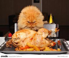 """""""Bu ne arkadaş her gün tavuk her gün tavuk, bir gün de lazanya yiyelim be"""""""