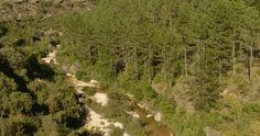 Río Isuala. Reserva Natural Fluvial en Aragón.