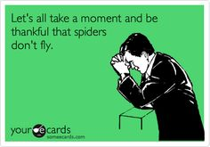 At least here....here counts more than there cuz here is where I am so as long as spiders don't fly here we can offer this thanks.