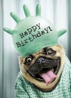 Looking for for ideas for happy birthday friendship?Check out the post right here for cool happy birthday inspiration.May the this special day bring you happiness. Happy Birthday Dog Meme, Happy Birthday Animals, Happy Birthday For Him, Birthday Wishes Quotes, Happy Birthday Messages, Happy Birthday Greetings, Animal Birthday, Birthday Pug, Funny Happy Birthday Images
