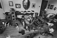 my house in 20 years.
