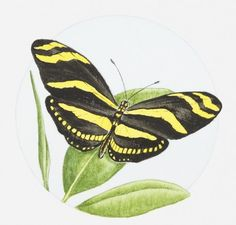 Print of Illustration of Zebra butterfly (Heliconius charitonius) on a leaf